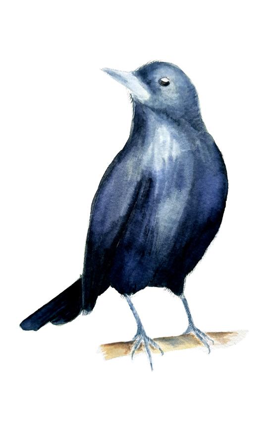 Curaeus-Curaeus. Ilustradora Natalia Buckowski.